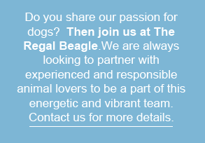 the regal beagle, dog sitting, dog walking, pet concierge services in needham, ma and surrounding areas